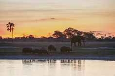 The Zambezi's Hwange River at sunset Cool Places To Visit, Places To Travel, Where To Go, Travel Style, Elephant, Africa, River, Sunset, World