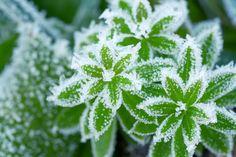 Které byliny vydrží zimu venku a které je v zimě třeba pěstovat v interiéru v květináčích či truhlících? Spring Photos, Google Images, Dandelion, Environment, Challenges, Herbs, Bouquet, Garden, Inspiration