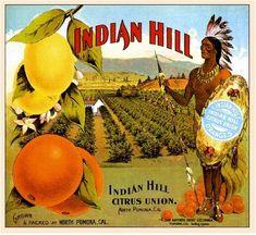 Fort Ft Pierce Bracken/'s Indian River Orange Citrus Fruit Crate Label Art Print