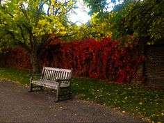 Park bench in London sorrounded by Autumn leaves and colors Air Balloon, Balloons, Set Design, Benches, Bicycles, Autumn Leaves, Bubbles, Photographs, London