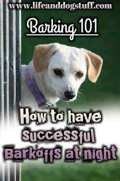 Barking 101 - How to Have Successful Barkoffs at Night | Life and Dog Stuff #dogs #doglovers #dogmom #doghumor #humor #funny #crazydoglady #dogblog #blogpost #pets