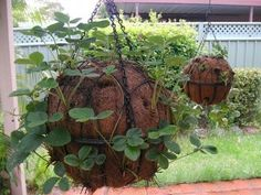 Strawberry globe hanging basket tutorial.  I may do this tomorrow!