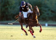 Polo: at the very least attend one match, so you can say you did.