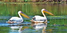 http://www.touringromania.com/tours/long-tours/explore-danube-delta-in-one-week-private-tour.html