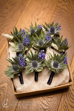 Blue thistle (eryngium) & muscari (grape hyacinth) Planet Flowers: Mansfield T… Blue thistle (eryngium) & muscari (grape hyacinth) Planet Flowers: Mansfield Traquair Thistle Boutonniere, Thistle Bouquet, Groomsmen Boutonniere, Boutonnieres, Wedding Groom, Rustic Wedding, Wedding Suits, Mansfield Traquair, Floral Wedding