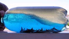Create your very own ocean in a bottle!  