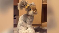 Meet Wally, the Instagram-Famous Bunny With Fluffy Pigtails for Ears