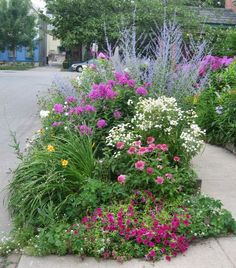 Great curbside garden packed with summer-blooming perennials.