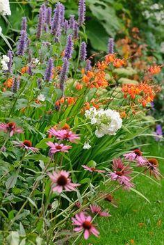 garden ideas border ideas herbaceous borders coneflower magnus echinacea purpurea anise