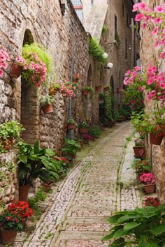Italian street. Spring is coming and the trees are blooming, small streets of Italy are becoming more and more beautiful.