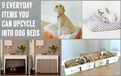DIY 9 everyday items you can upcycle into dog beds Diy Dog Bed, Diy Bed, Dog Crafts, Diy Craft Projects, Craft Ideas, Clever Dog, Pet Furniture, Dog Rules, Animal Projects