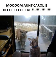 Funny Picture Of A Cat