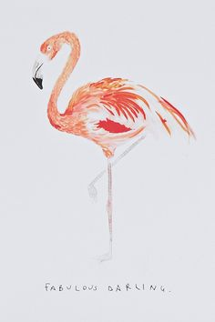Fab #Flamingo Card  #UrbanOutfitters