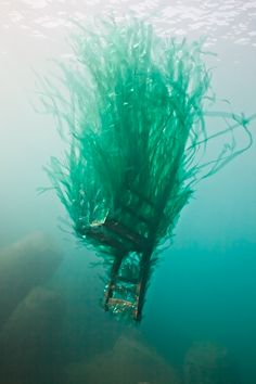 Underwater art showcasing the world of things discarded, via popperfont Forlane-6-Studio-Posidonia-1