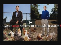 How conflict of interest and industry collaboration are damaging animal advocacy  What does Whole Foods' surreal Best Butcher Contest have to do with HSUS…