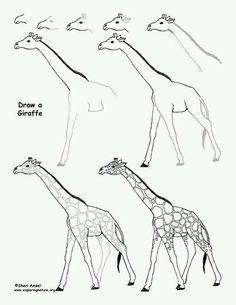 How to draw a giraffe drawing sheet, art lessons, drawing lessons, drawing tips Love Drawings, Doodle Drawings, Easy Drawings, Animal Drawings, Drawing Lessons, Drawing Techniques, Drawing Tips, Art Lessons, Van Gogh Watercolor
