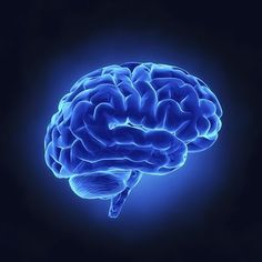 Jak+pracuje+Twój+mózg?