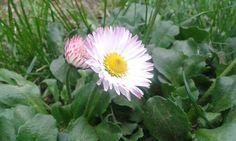 Ha a hangod hallom, a szívem kinyílik, mint virág a reggeli napsütésben. Iselin C. Hermann