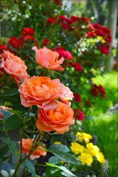 Beautiful flower by MamaMika on DeviantArt