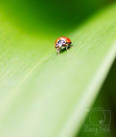 Ladybug Love by HookedOnTheHook on Etsy Losing A Baby, Ladybug, Love, Pets, Animals, Ladybugs, Amor, Animales, Animaux