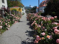 Der Wohlgeruch direkt vor der Tür! Aromatherapy in Wolfsberg! Sidewalk, Homes, Side Walkway, Sidewalks, Pavement, Walkways