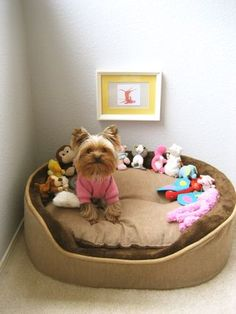 Yorkie. oh cute, if Bentley's bed was bigger I'd so do this, and see if he'd leave them there, lol