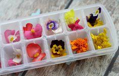 Zo vrolijk! IJsblokjes met eetbare bloemen.