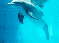 """Winter from the Movie """"Dolphin Tale"""""""