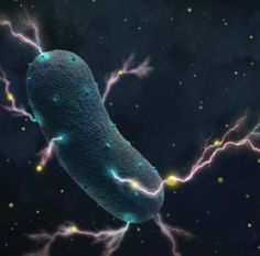 Some bacteria, like Listeria monocytogenes, can generate electricity. These bacteria transport electrons through the cell wall into the surrounding environments, with help from flavin molecules (shown in yellow). Gut Microbiome, Cell Wall, Gut Bacteria, Gut Health, Ecology, Did You Know, Dog Lovers, Survival, Animals