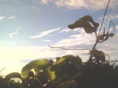 Foto keindahan Indonesia,tetaplah berkarya walau karya yang kamu buat,tidak di hargai orang lain. Celestial, Sunset, Outdoor, Outdoors, Sunsets, Outdoor Games, The Great Outdoors, The Sunset
