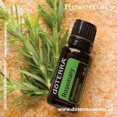 ROSEMARY ESSENTIAL OIL / ROSMARIN ETERISK OLJA
