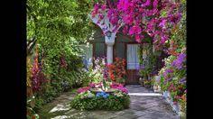 Plantas y mucho color en tus jardines y patios. Video 3 de 3