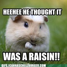 Reasons kids and guinea pigs don't mix haha