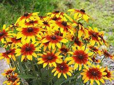 A legnépszerűbb kerti virágok, amelyek hosszú időn át virágzanak, így egész nyáron gyönyörködhetünk bennük! - Bidista.com - A TippLista! Beautiful Flowers, Home And Garden, Gardening, Outdoor, Garden, Flowers, Outdoors, Lawn And Garden, Outdoor Games