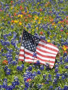 American Flag in Field of Blue Bonnets, Paintbrush, Texas Hill Country, USA Photographic Print by Darrell Gulin at Art.com