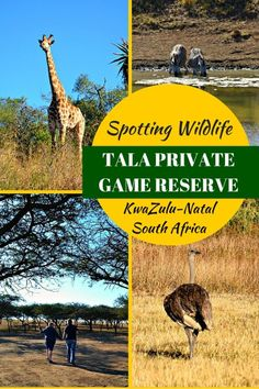 Just 40mins from Durban, Tala Private Game Reserve makes for the perfect day…