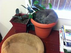 If your cat plant assumes the doughnut position, you're doing something right.