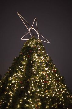 The largest of our many Christmas trees. Vancouver City, Christmas Trees, Christmas Ornaments, Holiday Decor, Xmas Trees, Christmas Jewelry, Christmas Decorations, Christmas Tree, Christmas Decor
