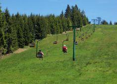 Freie Fahrt auf den Ruhestein mit Schwarzwald Plus