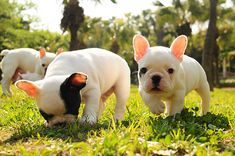 I seriously LOVE frenchies