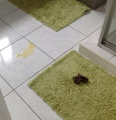 How to house train an adult dog stop dog peeing in house for How to keep cat from pooping on floor