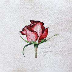 Super flowers watercolor drawing watercolour 40 Id Watercolor Rose, Watercolor Drawing, Watercolor Cards, Painting & Drawing, Art Floral, Rose Drawing Tattoo, Watercolor Paintings For Beginners, Film Disney, Art Sketchbook