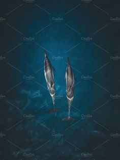 Hawaii Dolphins Photos Aerial of Hawaiian Dolphins by After Five Business Cards And Flyers, Business Card Logo, Dolphin Photos, 3d Photo, Texture Vector, Business Illustration, Photo Effects, Watercolor Cards, Nature Photos