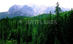"""""""Alpine Forest Bavaria Germany"""" Photography art prints and posters by Kevin W. Smith - ARTFLAKES.COM"""