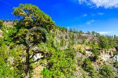 Qdiz Stock Images Forest on Mounains on Tenerife Island