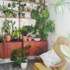 8,889 отметок «Нравится», 52 комментариев — Urban Jungle Bloggers™ (@urbanjungleblog) в Instagram: «Midweek chill in the armchair with the best view! #plantshelfie :@theresenybu…»