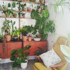 8,889 отметок «Нравится», 52 комментариев — Urban Jungle Bloggers™ (@urbanjungleblog) в Instagram: «Midweek chill in the armchair with the best view! #plantshelfie :@theresenybu…»