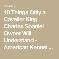 10 Things Only a Cavalier King Charles Spaniel Owner Will Understand - American Kennel Club