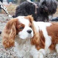 Our top models are wearing Patti Furry Sofienberg Park Collar set. Made with durable cotton webbing #dog #petfancy #dogs #petstagram #instadog #petsagram #doglover #dogs_of_instagram #instagramdogs #pup #ilovemydog #honden #sofienbergparken #oslove #pup #ilovemydog #honden #hunden #instapuppy #lovedogs #mypets #shoping #minikpatiler