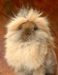 Lion Head Rabbit - Heart!